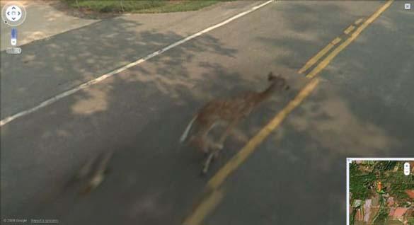 Google Street View (5)