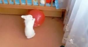 Κουνέλι vs Μπαλόνι (Video)