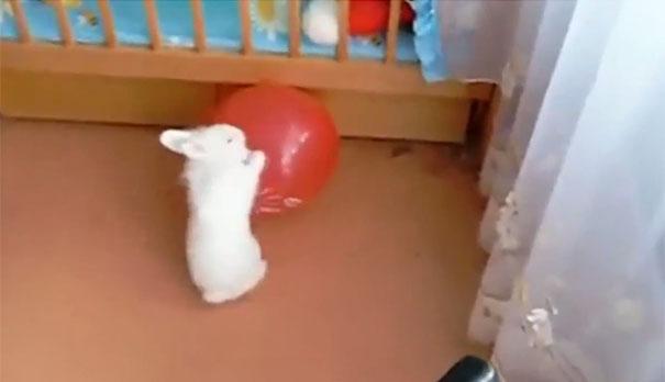 Κουνέλι vs Μπαλόνι