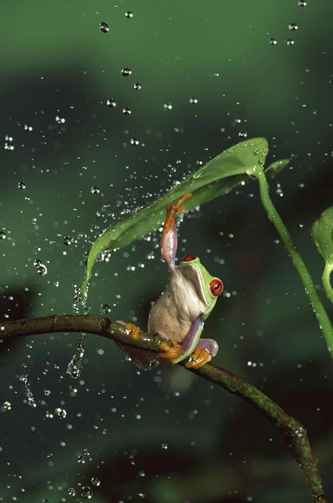 Ομπρέλα στη φύση | Φωτογραφία της ημέρας