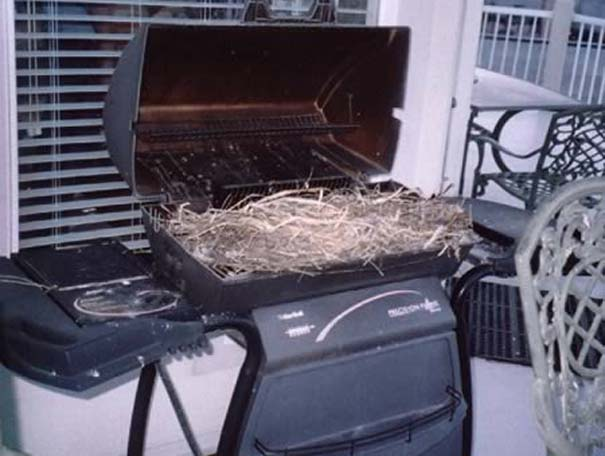 Τα πιο ασυνήθιστα μέρη για φωλιές πουλιών (3)