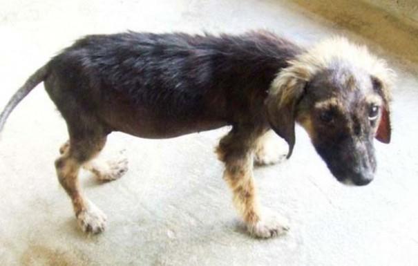 Σκύλοι πριν και μετά τη διάσωση (1)