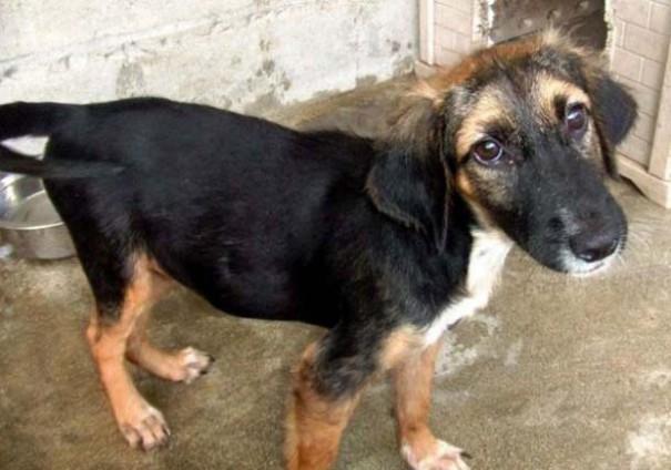 Σκύλοι πριν και μετά τη διάσωση (2)
