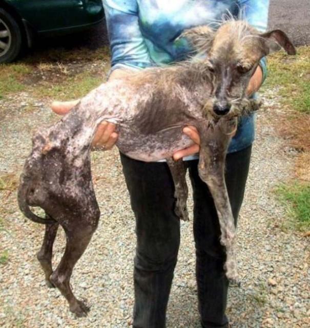 Σκύλοι πριν και μετά τη διάσωση (3)