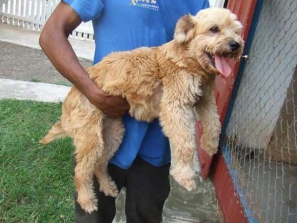 Σκύλοι πριν και μετά τη διάσωση (4)