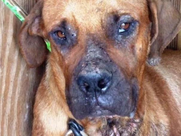 Σκύλοι πριν και μετά τη διάσωση (7)