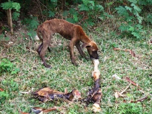 Σκύλοι πριν και μετά τη διάσωση (9)