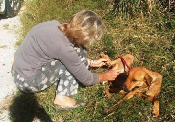 Σκύλοι πριν και μετά τη διάσωση (11)
