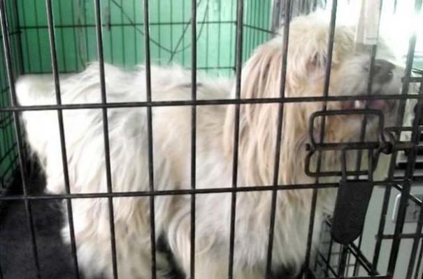 Σκύλοι πριν και μετά τη διάσωση (13)