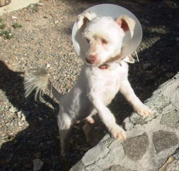 Σκύλοι πριν και μετά τη διάσωση (14)