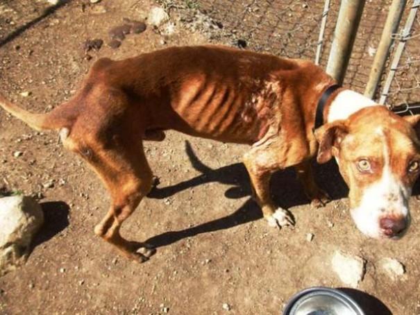 Σκύλοι πριν και μετά τη διάσωση (15)