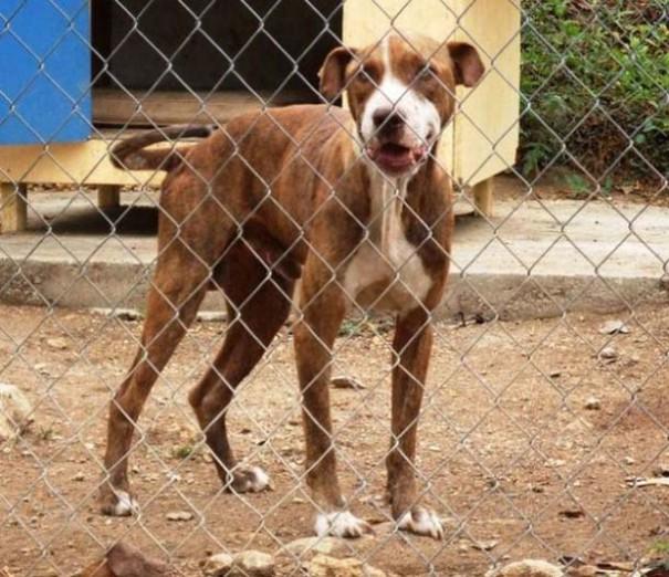 Σκύλοι πριν και μετά τη διάσωση (16)