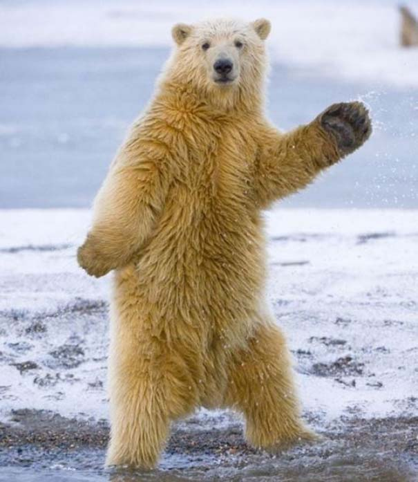 Ζώα που το έριξαν στον χορό (1)