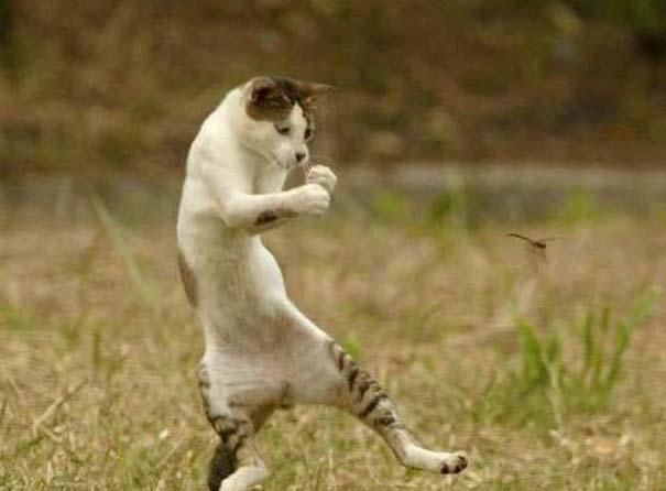 Ζώα που το έριξαν στον χορό (2)