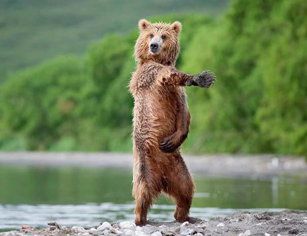 Ζώα που το έριξαν στον χορό (4)