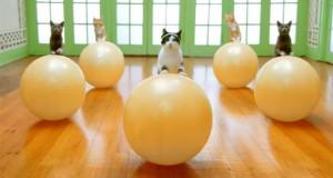 Αερόμπικ για γάτες (Video)