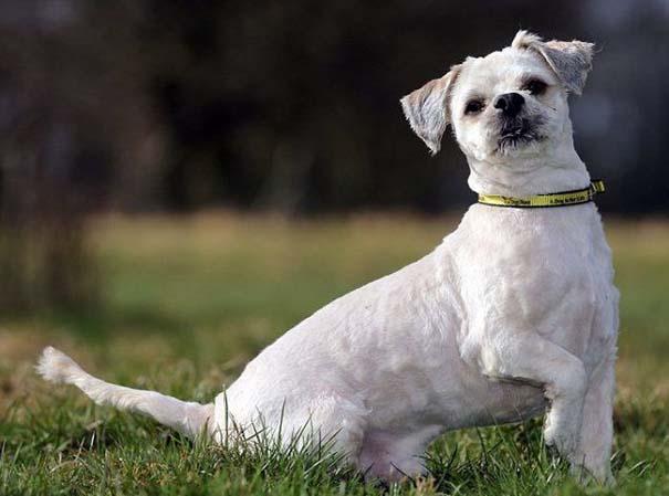 Εγκαταλελειμμένος σκύλος πριν και μετά το κούρεμα (7)