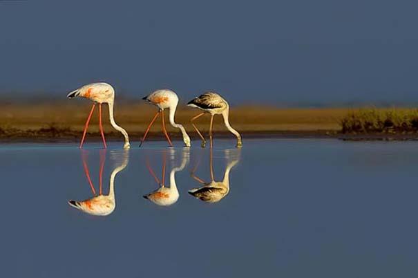 Εκπληκτικές φωτογραφίες αντανάκλασης στο νερό (11)
