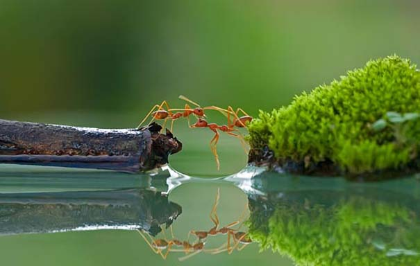 Εκπληκτικές φωτογραφίες αντανάκλασης στο νερό (16)