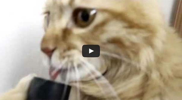 Γάτα προσπαθεί να ρουφήξει την ηλεκτρική σκούπα