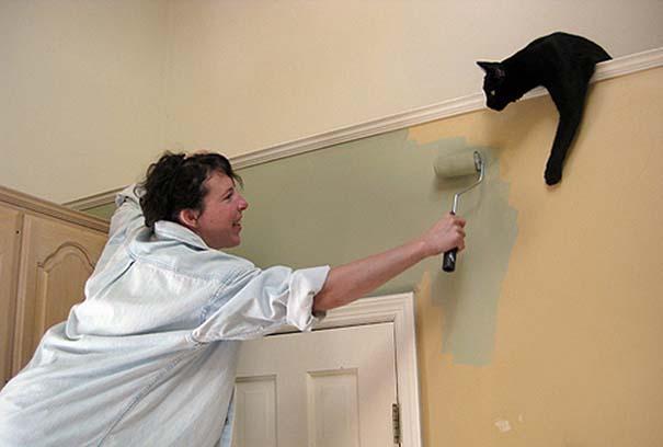 Γάτες που... κάνουν τα δικά τους! (17)