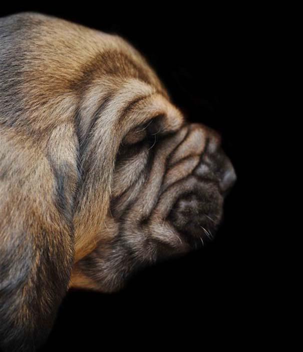 Κουτάβια από διάφορες ράτσες σκύλων (3)
