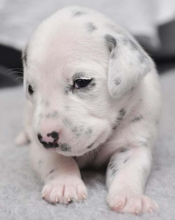 Κουτάβια από διάφορες ράτσες σκύλων (4)
