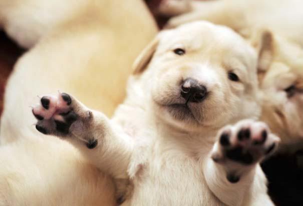 Κουτάβια από διάφορες ράτσες σκύλων (8)