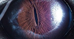 Μάτια ζώων σε εντυπωσιακές λήψεις #2