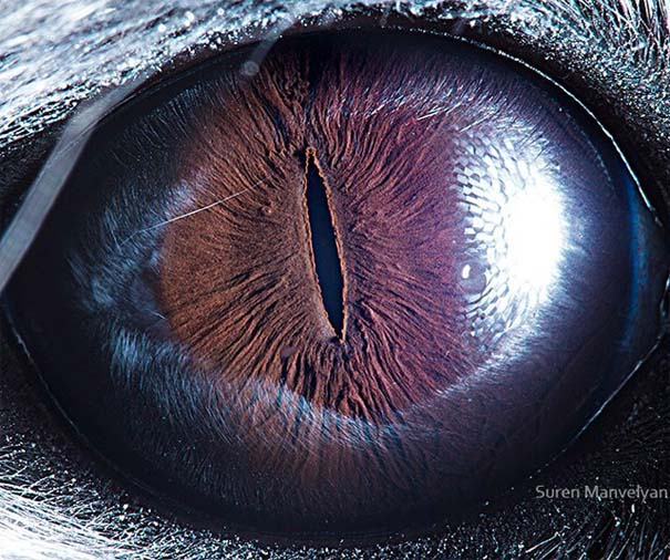Μάτια ζώων σε εντυπωσιακές λήψεις (4)