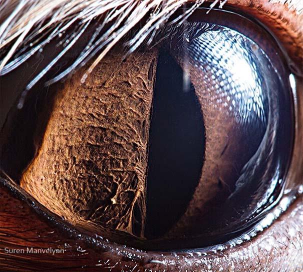 Μάτια ζώων σε εντυπωσιακές λήψεις (6)