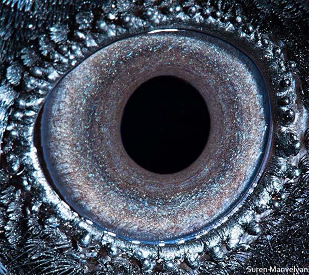 Μάτια ζώων σε εντυπωσιακές λήψεις (7)