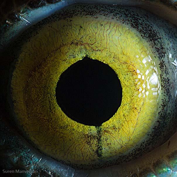 Μάτια ζώων σε εντυπωσιακές λήψεις (8)