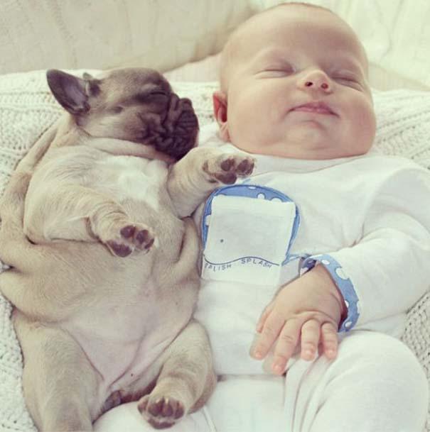 Μωρό & κουτάβια bulldog (5)