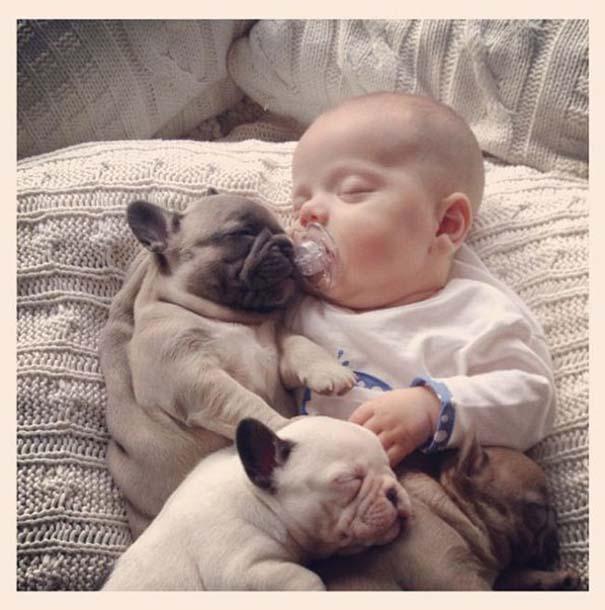 Μωρό & κουτάβια bulldog (7)