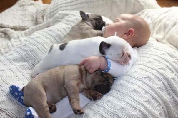 Μωρό & κουτάβια bulldog (8)