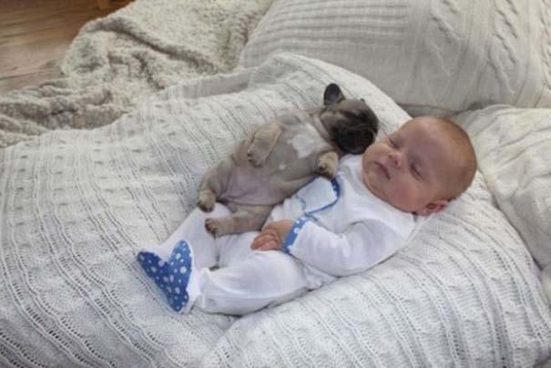 Μωρό & κουτάβια bulldog (9)