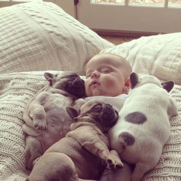 Μωρό & κουτάβια bulldog (11)