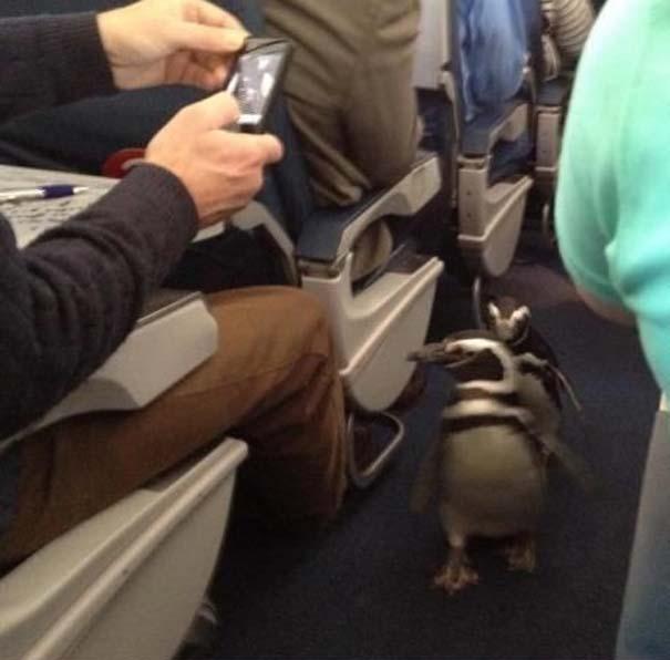 Αστεία & παράξενα περιστατικά στο αεροπλάνο (12)
