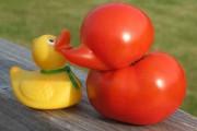 Παράξενα/Αστεία φρούτα & λαχανικά (9)