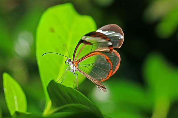 Η πεταλούδα με τα διάφανα φτερά (3)