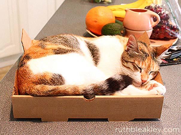 Πράγματα που μπορείτε να φτιάξετε με ένα κουτί πίτσας (7)