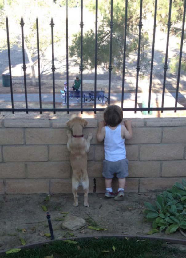 Σκύλοι που θα έκαναν τα πάντα για τα παιδιά (1)