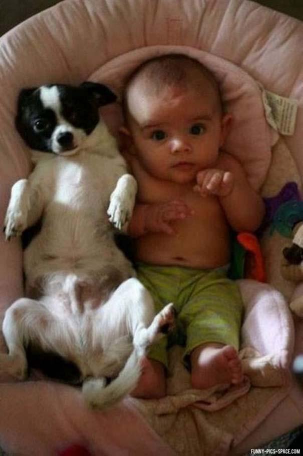 Σκύλοι που θα έκαναν τα πάντα για τα παιδιά (4)
