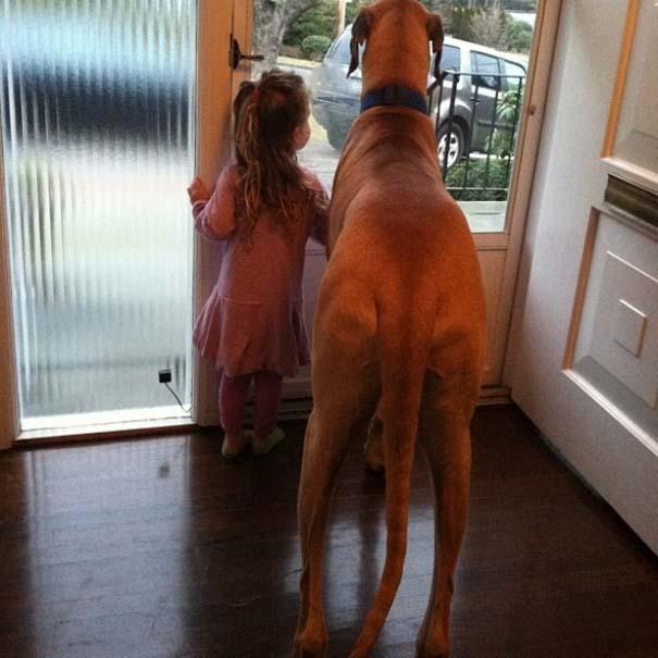 Σκύλοι που θα έκαναν τα πάντα για τα παιδιά (15)