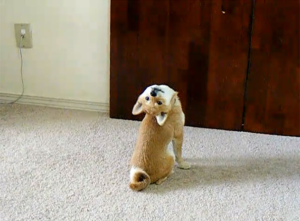 Σκύλος ξεχνάει πως λειτουργεί ο λαιμός...