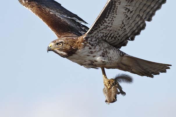 Ζώα που ετοιμάζονται να γίνουν... γεύμα (13)
