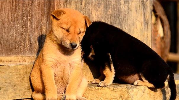 Ζώα που προσπαθούν να μείνουν ξύπνια