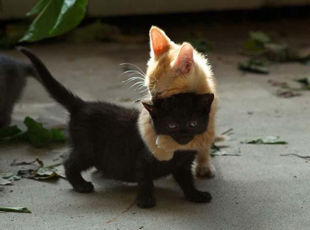 Φωτογραφίες ζώων που ξέρουν τι θα πει αγάπη (2)
