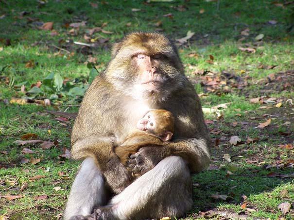 Φωτογραφίες ζώων που ξέρουν τι θα πει αγάπη (3)